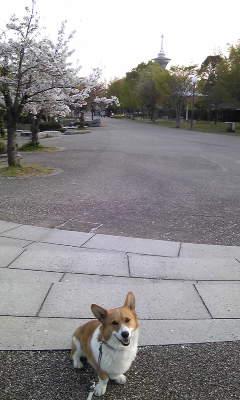 dogdays2