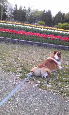 dogdays3