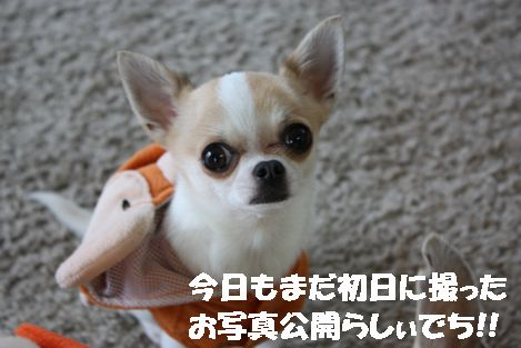 IMG_00870.jpg