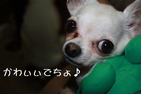 IMG_03660.jpg
