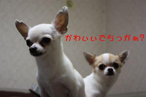 IMG_0592.jpg