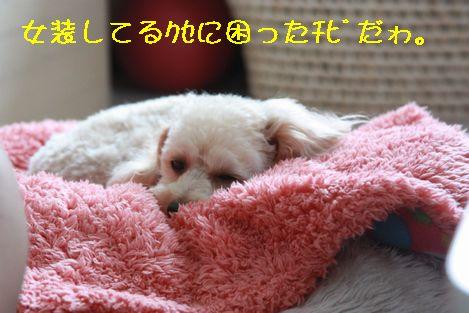IMG_2338.jpg