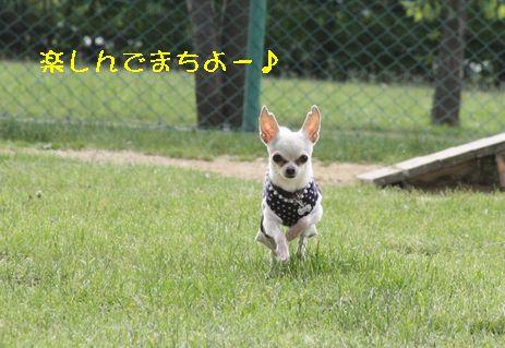 IMG_6257.jpg