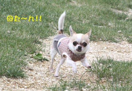 IMG_6269.jpg