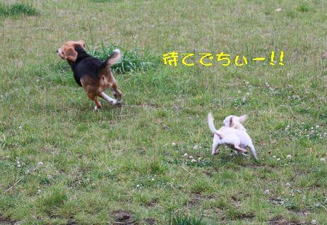 IMG_6528.jpg