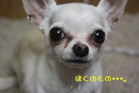 IMG_6701.jpg