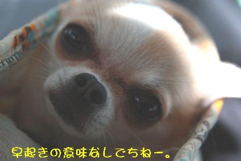 IMG_6713.jpg