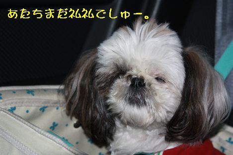 IMG_6716.jpg
