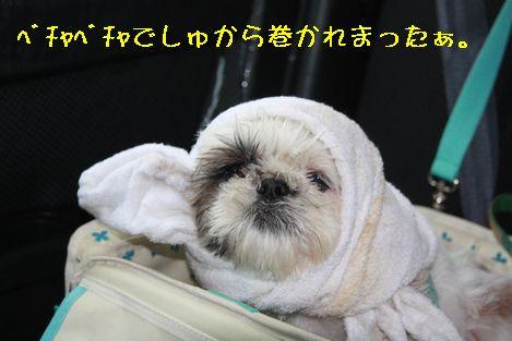 IMG_6769.jpg