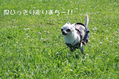 IMG_71310.jpg