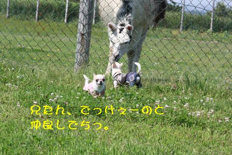 IMG_71530.jpg