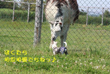 IMG_71540.jpg