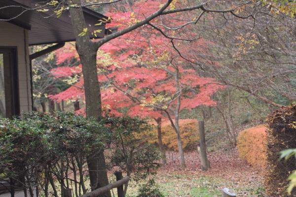 keyaki-002003s.jpg