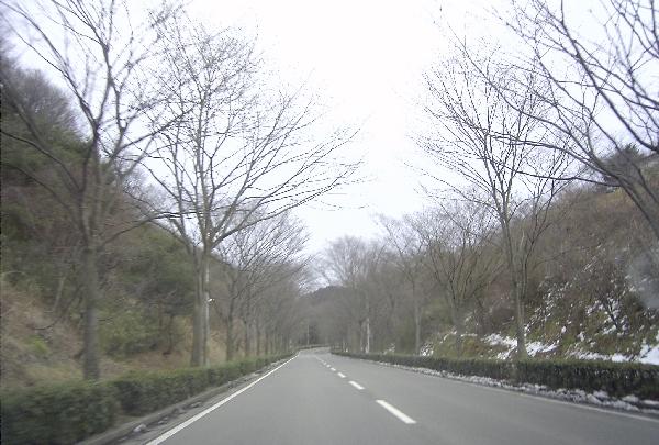 keyaki-002025s.jpg