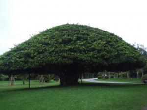 この木なんの木~