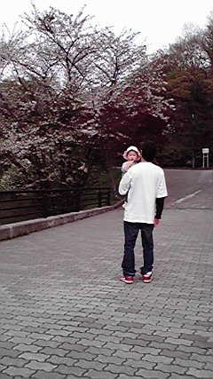 2010051816020002 桜