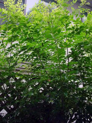 ジャングルのような庭木