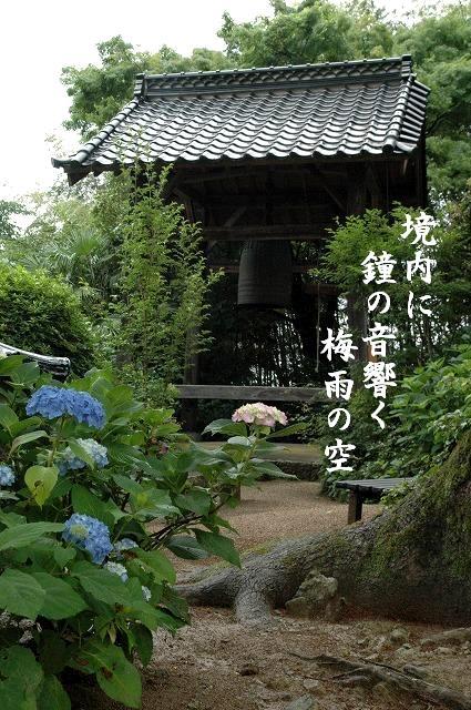 長法寺の紫陽花9
