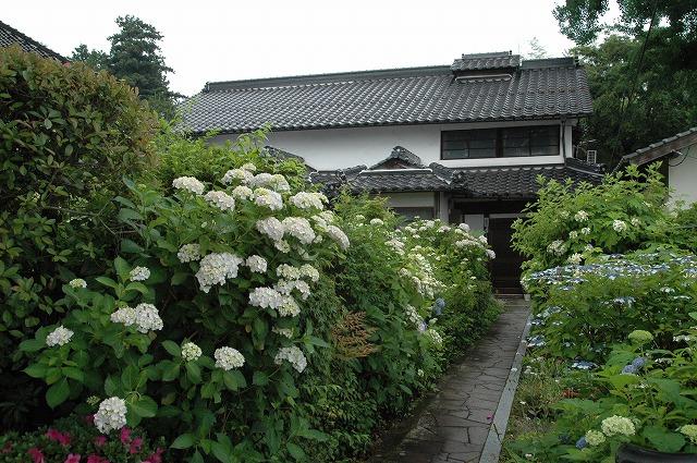 長法寺の紫陽花15