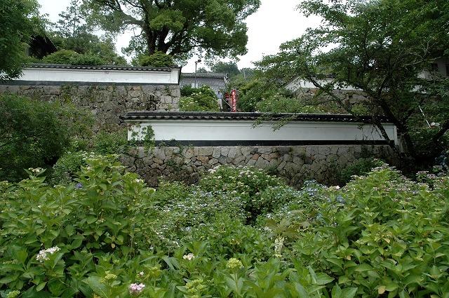 長法寺の紫陽花28