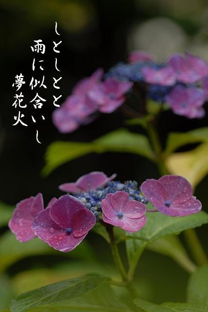 夢花火11