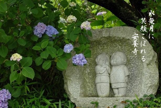 安養寺の紫陽花43