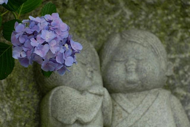 安養寺の紫陽花44