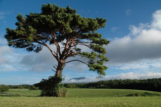 鳩ヶ原から見る大山1
