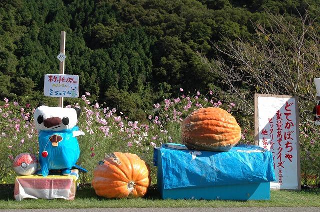 どてかぼちゃ1