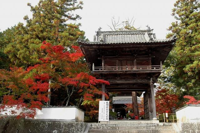 宝福寺の紅葉1