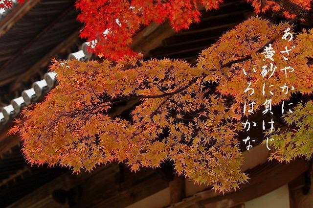 宝福寺の紅葉5