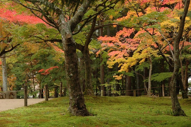 宝福寺の紅葉6