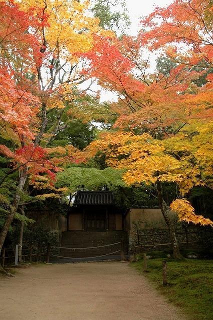 宝福寺の紅葉7