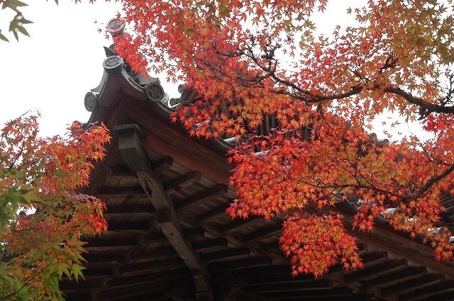 宝福寺の紅葉9