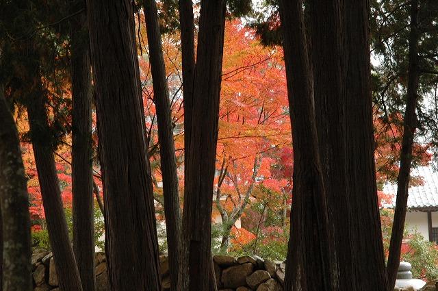 宝福寺の紅葉16