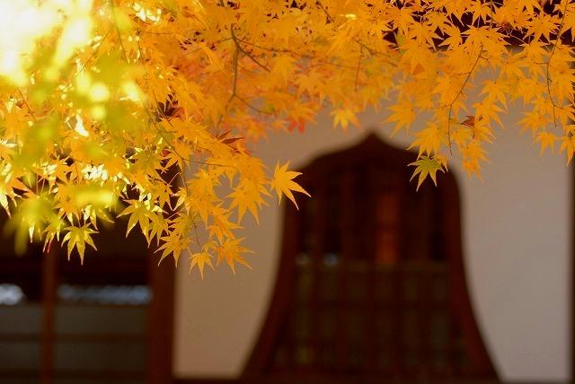龍泉寺の紅葉5