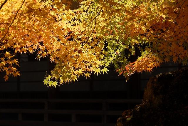 龍泉寺の紅葉8