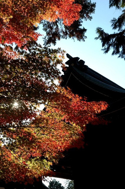 龍泉寺の紅葉19