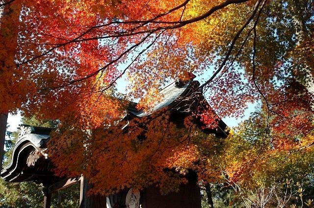 龍泉寺の紅葉20