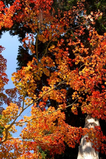 龍泉寺の紅葉25
