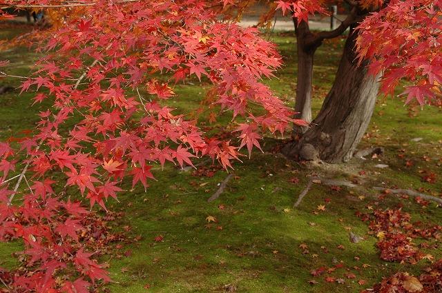 後楽園の紅葉11