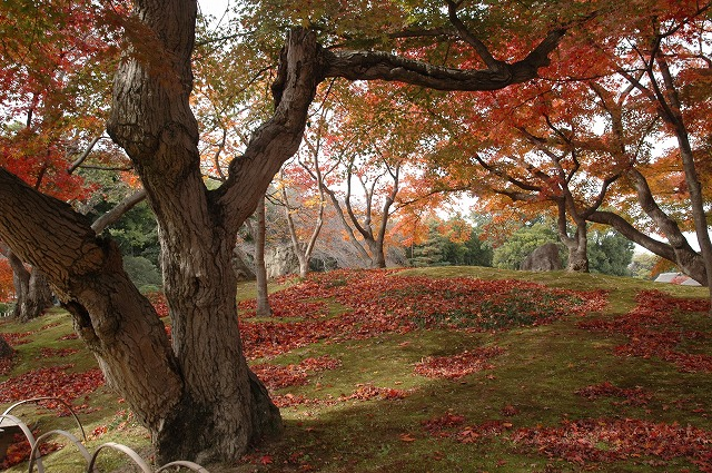 後楽園の紅葉17