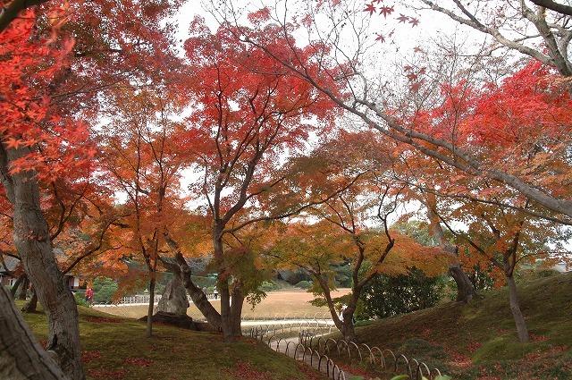 後楽園の紅葉18