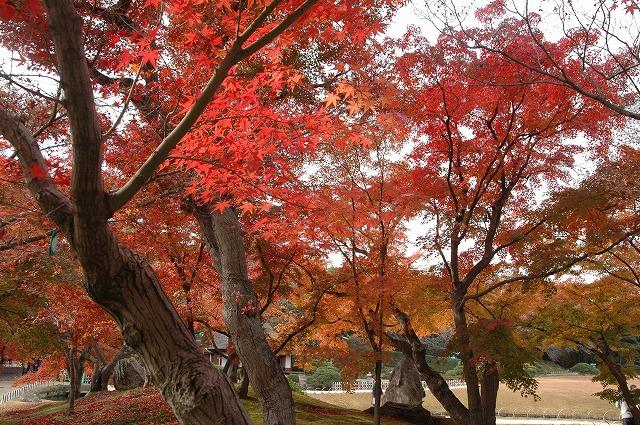 後楽園の紅葉19