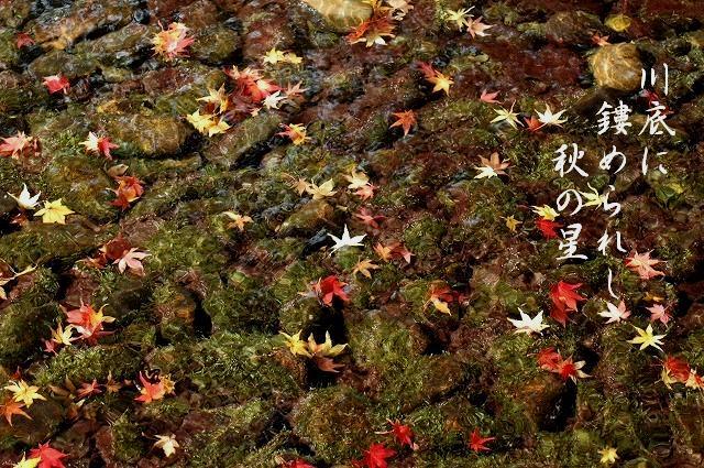 後楽園の紅葉36