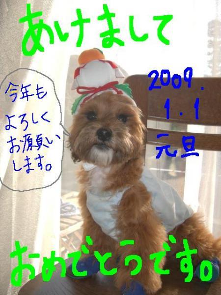 CIMG1390.jpg