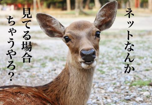 narashika06.jpg