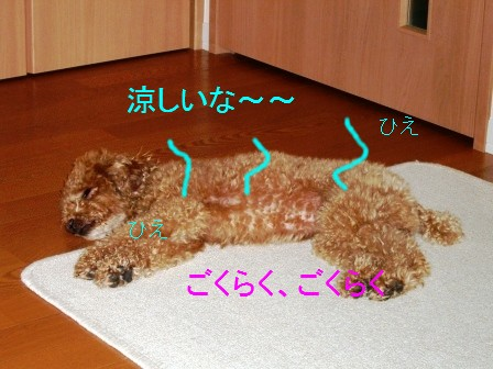 CIMG8826.jpg