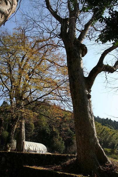 nyako20110227_3.jpg