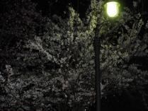 120420 夜桜3